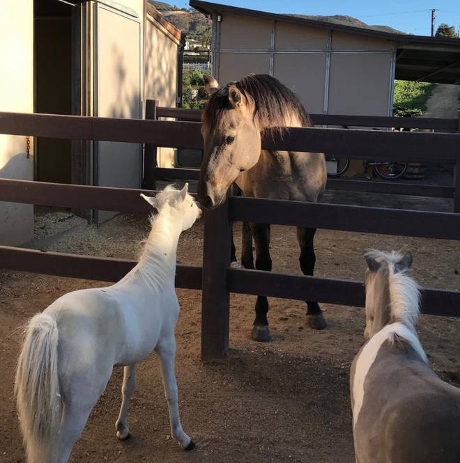 Lady Gaga's home has stables for her beloved horses