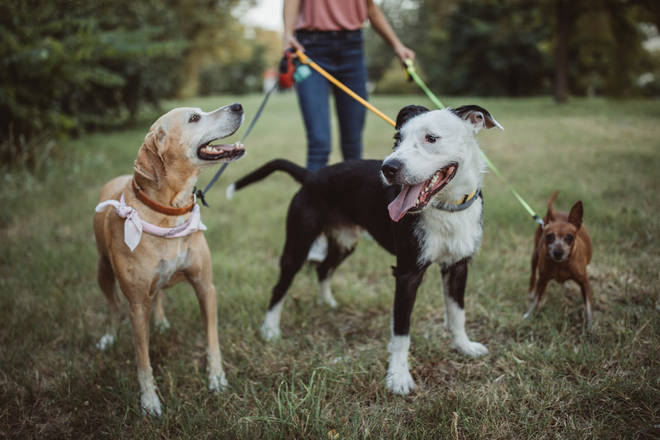 It's safe to walk your dog during the coronavirus pandemic if you continue to social distance
