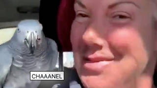 Chanel the parrot has been found safe and sound.