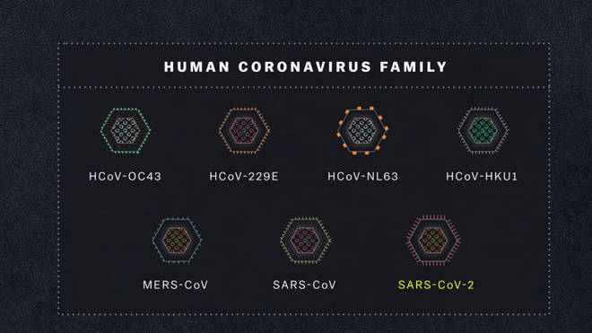 There are seven coronaviruses already known to infect humans
