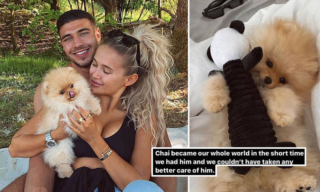 Molly-Mae Hague and Tommy Fury's puppy has sadly died