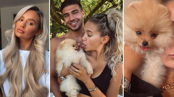 Molly-Mae Hague and Tommy Fury's dog Chai suddenly died