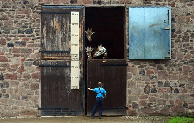 Zoos struggled financially during the coronavirus lockdown
