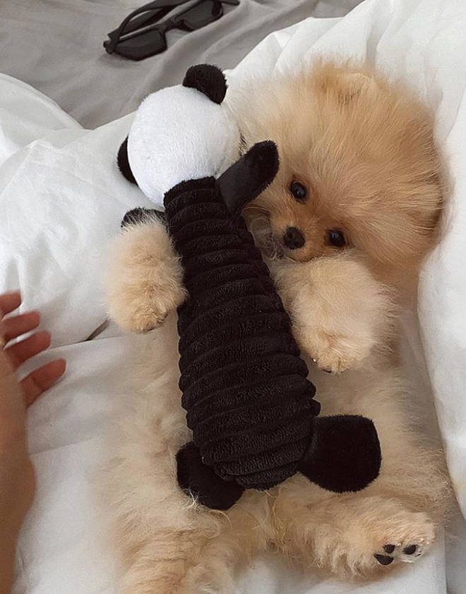 Molly-Mae's dog Mr Chai died days after they brought him home