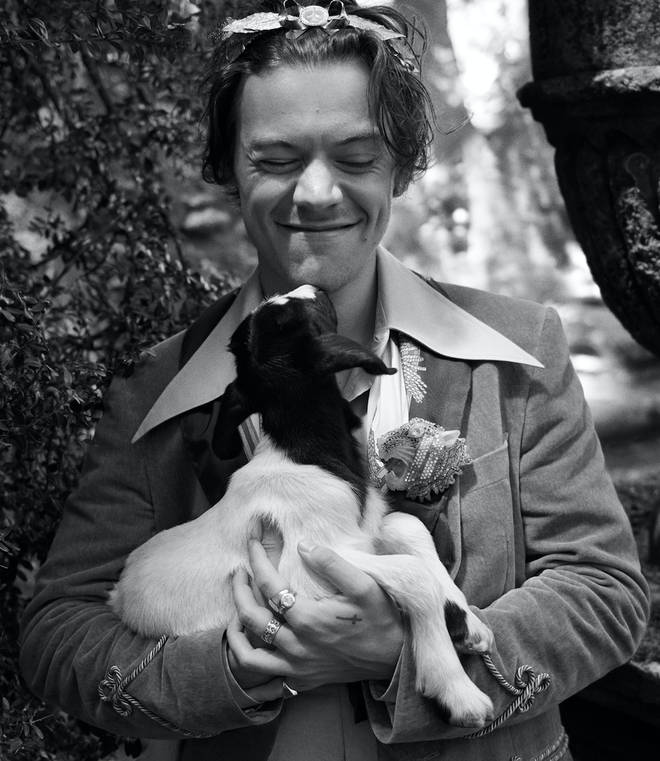 Harry Styles Cuddles A Baby Goat For Gucci Campaign