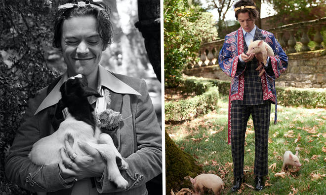 Harry Styles' Latest Gucci Campaign Features Farm Animals & Is As Cute As You Think