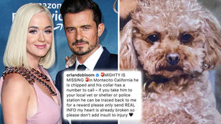 Katy Perry and Orlando Bloom's dog is missing in California.