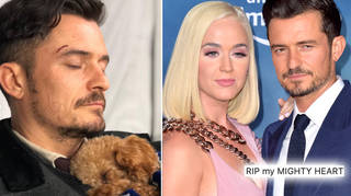 Katy Perry and Orlando Bloom's dog went missing last week.
