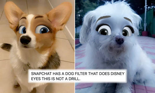 How To Do The Disney Snapchat Pet Filter To Transform Your Four Legged  Friend - Capital