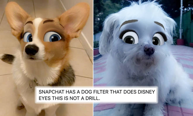 This 'Disney' Snapchat filter has arrived to transform your dogs