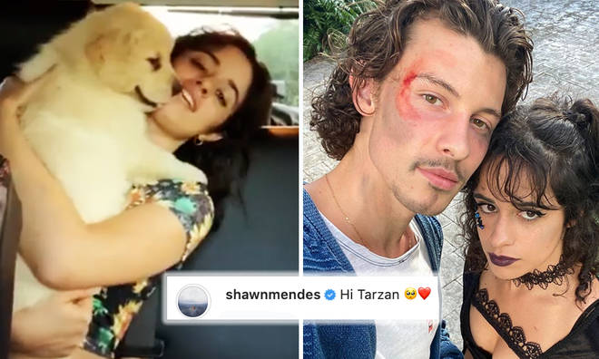 Shawn Mendes and Camila Cabello welcome dog 'Tarzan' to their family