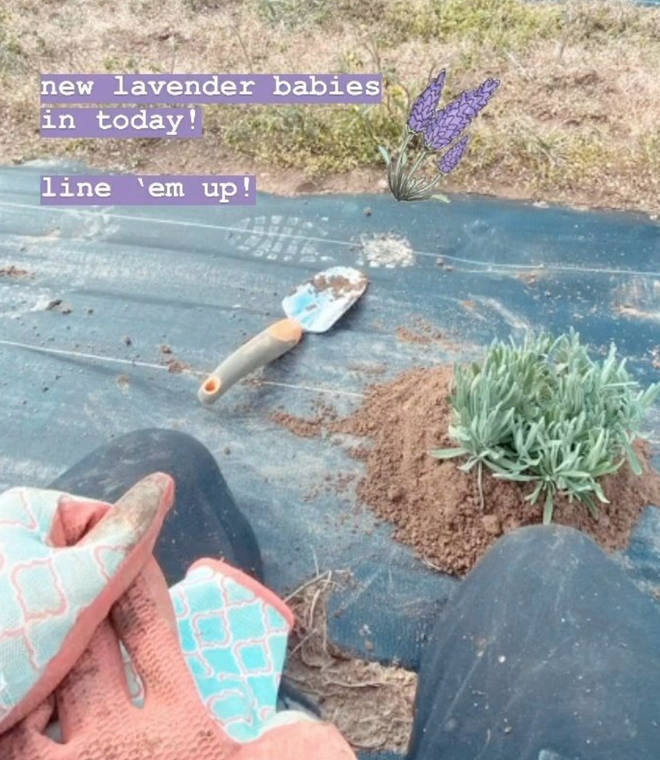 Gigi recently posted that she was planting 'lavender babies'.