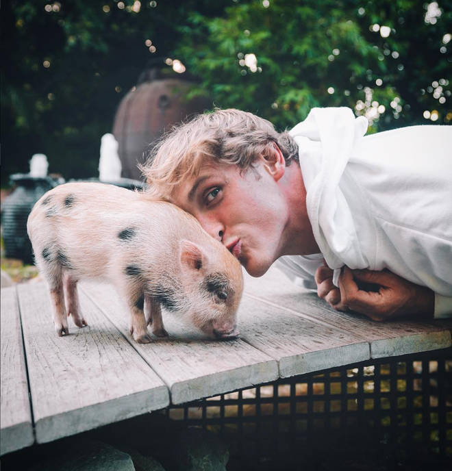 Logan Paul and Chloe Bennet shared a pet pig called Pearl BingBing