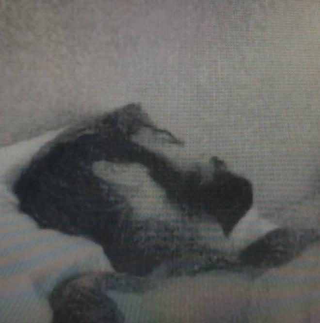 Zayn Malik snoozed while thousands watched
