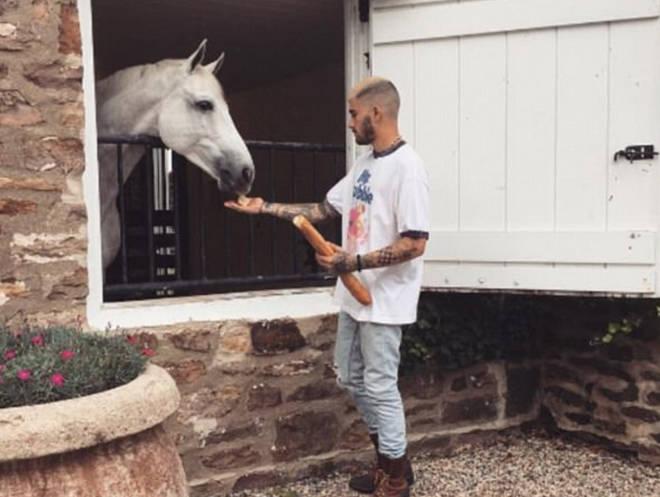 Gigi and Zayn have a horse named Cool.