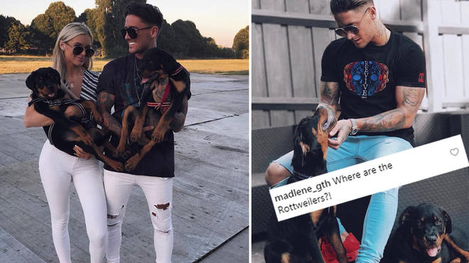 Fans are questioning why Stephen Bear hasn't posted his dogs in months.