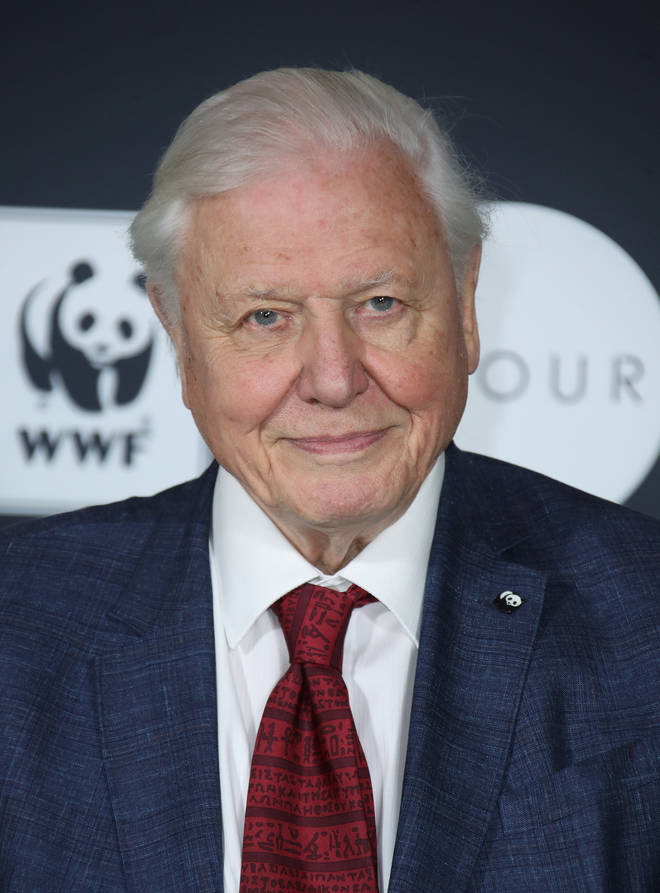 David Attenborough is joining forces with Netflix and WWF with new documentary, Our Planet