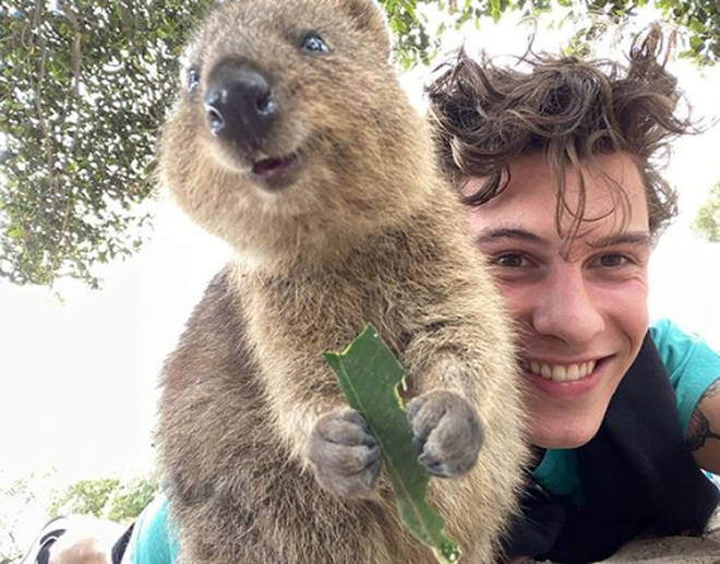 Shawn Mendes and a quokka pose for a selfie